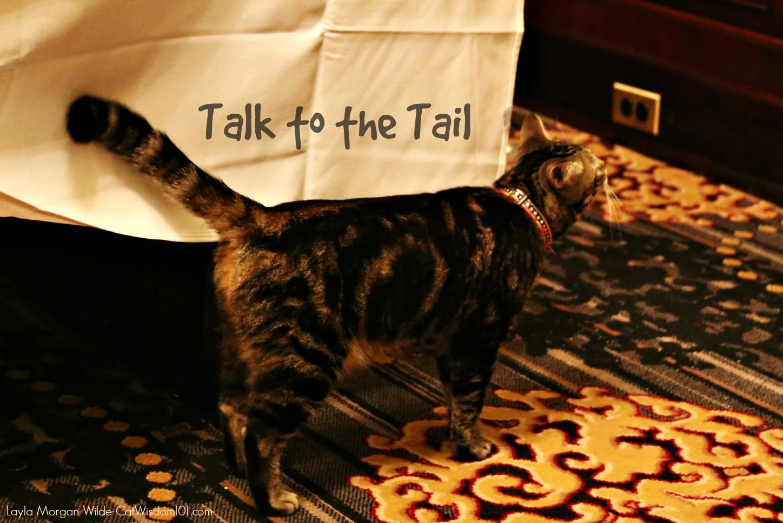 cats eating habits