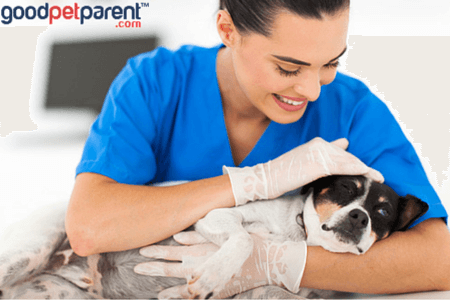 Veterinary-Technicians-Quiet-Angels-Veterinary-Medicine
