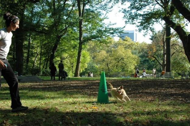 agility-reactive-dogs