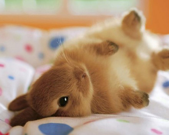 Bunny benefits: 10 reasons to rescue a rabbit | Victoria Stilwell ...