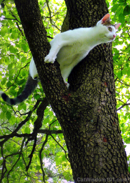 cat-in-a-tree