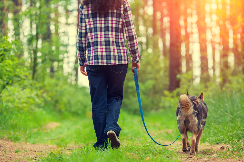 Make Your Dog Walk More Fun