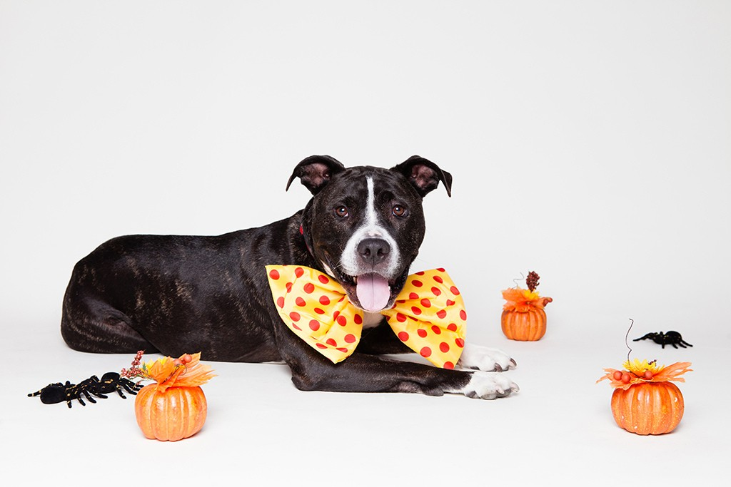 Victoria Stilwell S Top Ten Halloween Pet Safety Tips