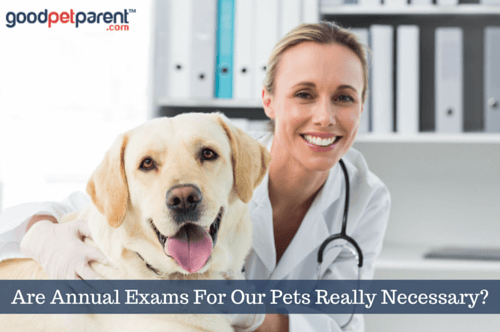 image-goodpetparent_are-annual-exams-pets-necessary