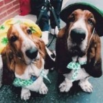 We BOTH pooped in the middle of the street during the St. Patrick\`s Day parade.
