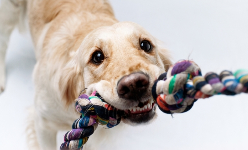 Image result for dogs with favourite toy