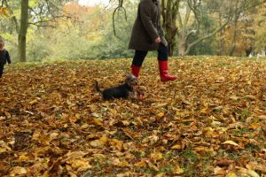 Kicking through autumn leaves with your dog