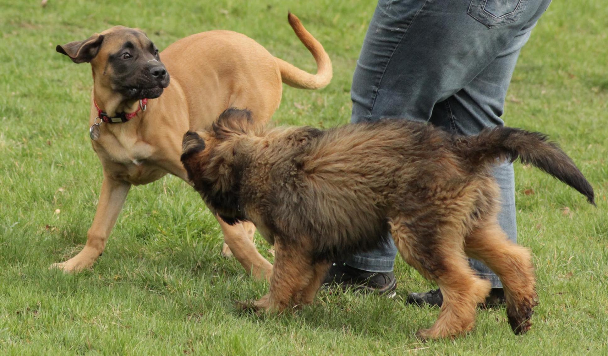 Dog Seems Fearful On Walks
