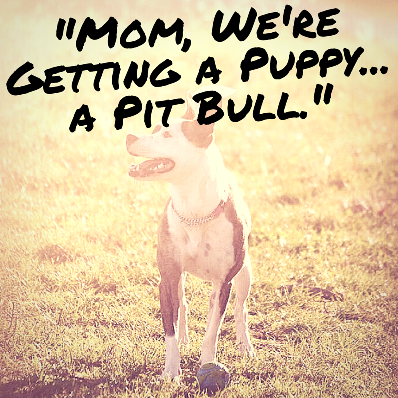 """Mom, we're getting a puppy...a pit bull"" @lolathepitty @positively"