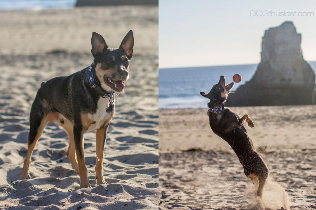 Active sport dog on the beach