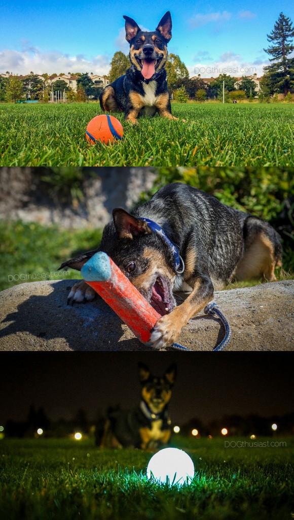 Dog toy safety