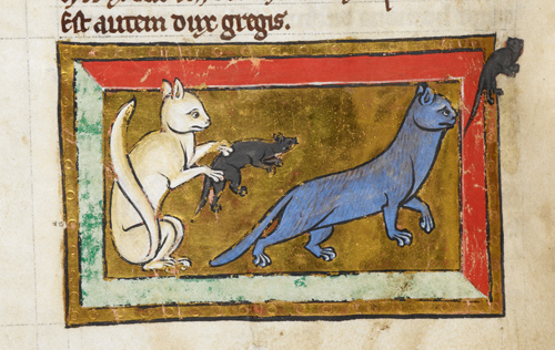 Pet care in the Middle Ages was surprisingly advanced.