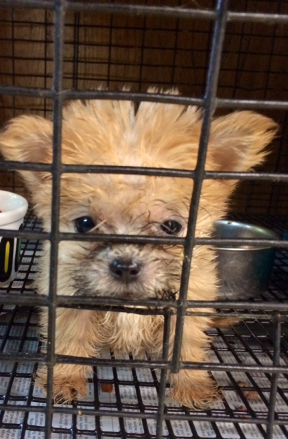 This tiny puppy was one of the survivors of the puppy mill.