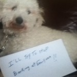 stop  Barking  at  Everyone