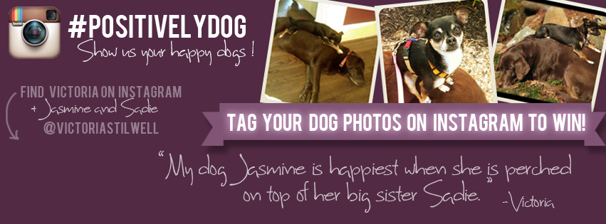 Tag your Instagram photos or videos #PositivelyDog to win personalized packages from Victoria.