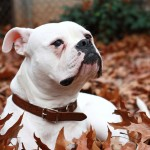 4 Ways to Help Your Reactive Dog Relax this Holiday Season