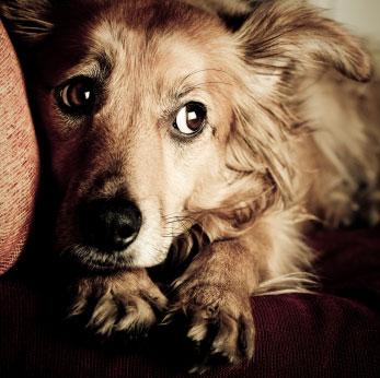 scared-dog1