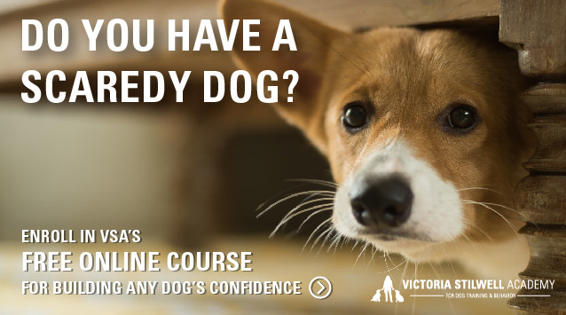 Do you have a scaredy dog? Enroll in VSA's free online course for building any dog's confidence!