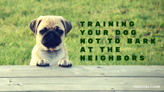 training your dog not to bark at the neighbors