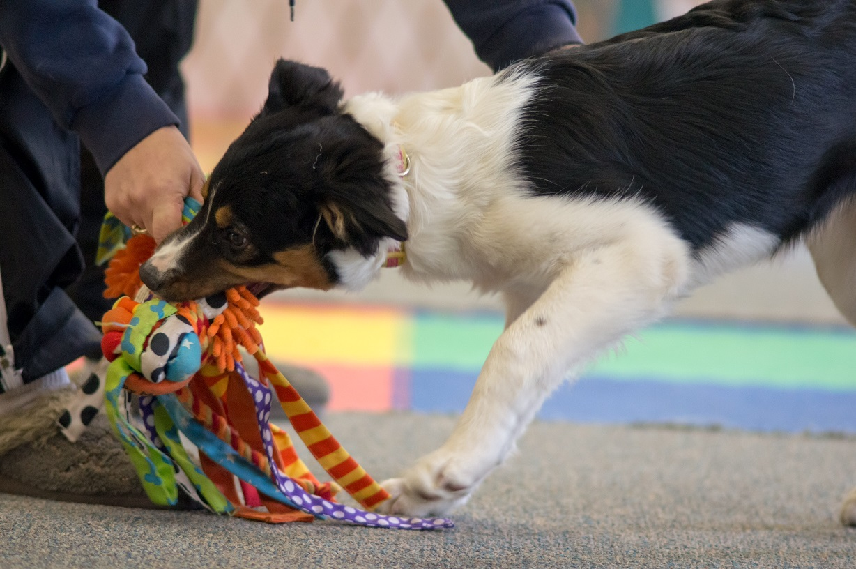 Tying a few toys together or using a toy with lots of fun things to grab can entice a dog's interest.